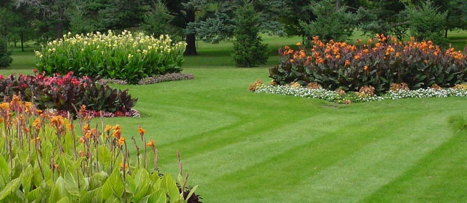 Lawn care tips want a green luscious lawn gardeners palace - Fight weeds with organic solutions practical tips in the garden ...